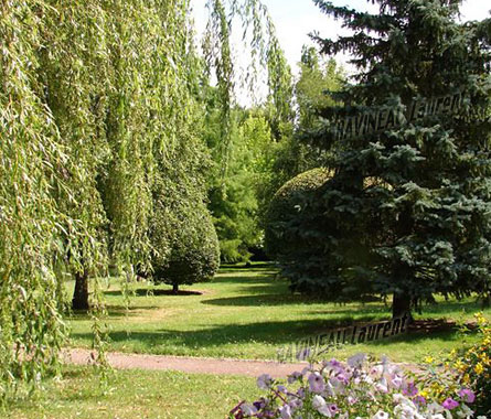 Ravineau laurent entretien jardins parc 41 for Entretien jardin loiret